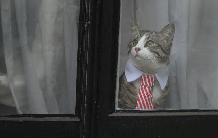 Was weiß Katze James?